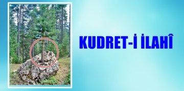 KUDRET-İ İLAHÎ