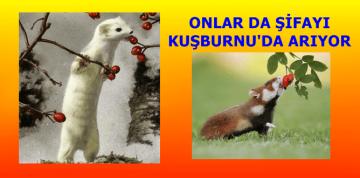 KUŞBURNU'NUN SEVİMLİ DOSTLARI
